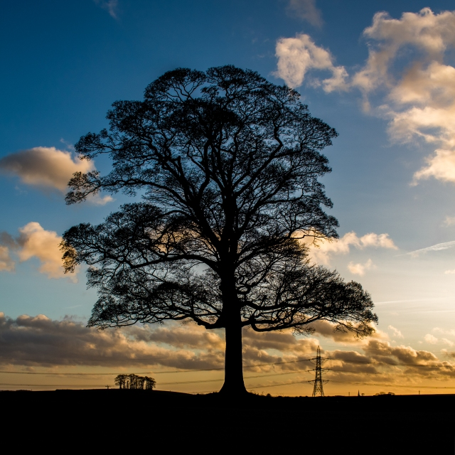 Tree at Hooton Levitt-3.jpg