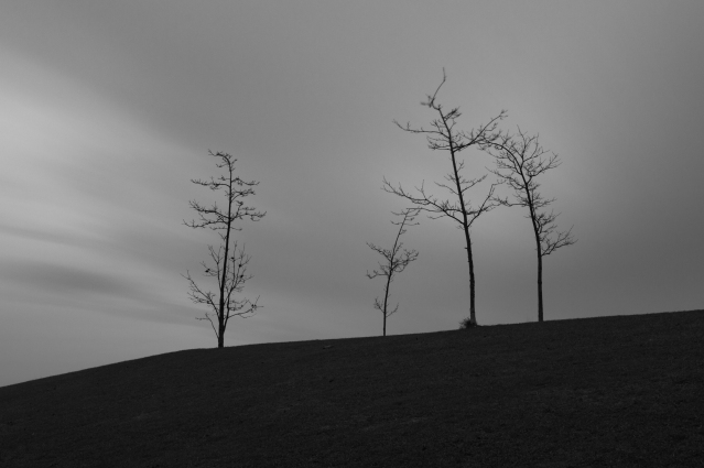 Four Trees, University of York (Flickr).jpg