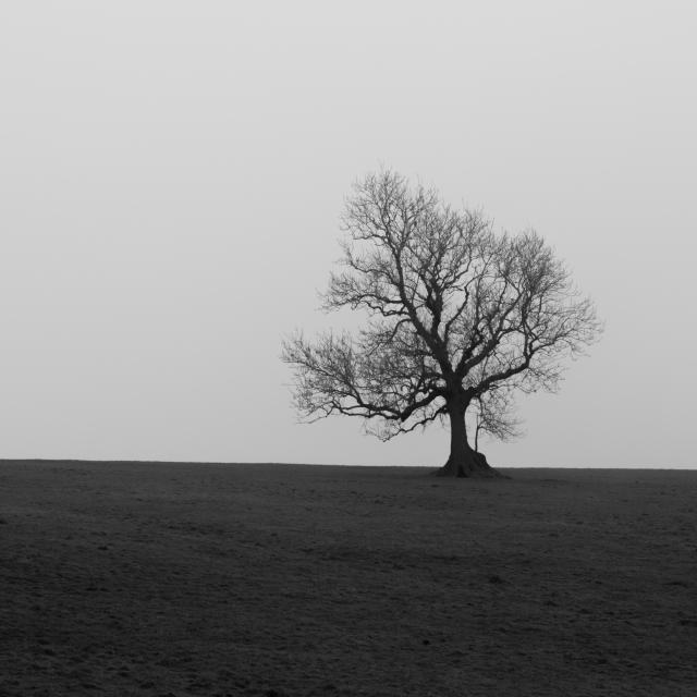 Chapel Hill Tree, Skipton, 02