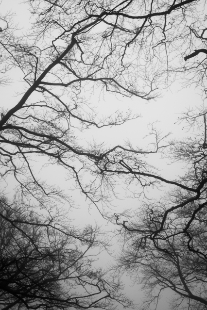 Branches, 01 (Flickr).jpg