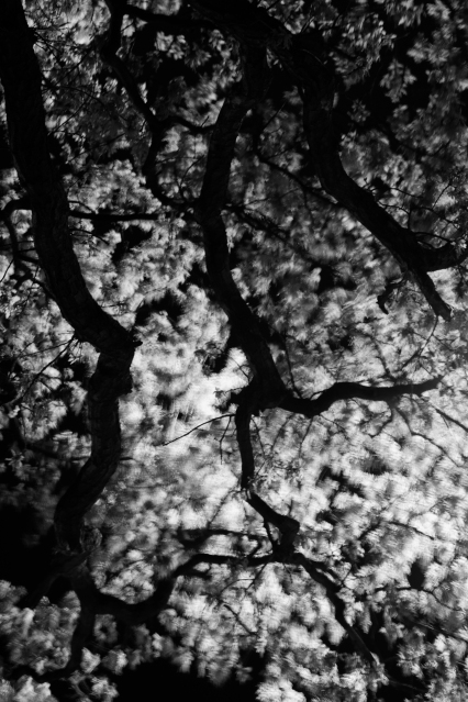 Branches, 03 (Flickr).jpg