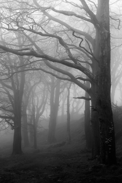 Trees in Fog, Skipton (Flickr).jpg