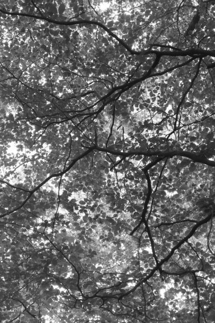 Branches, 04 (Flickr).jpg