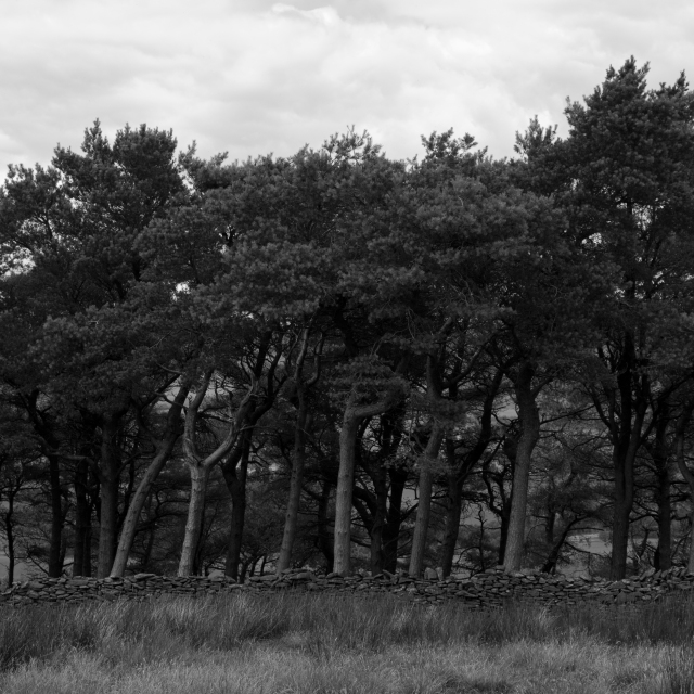 Woods, Skipton Moor, #01 (Flickr).jpg