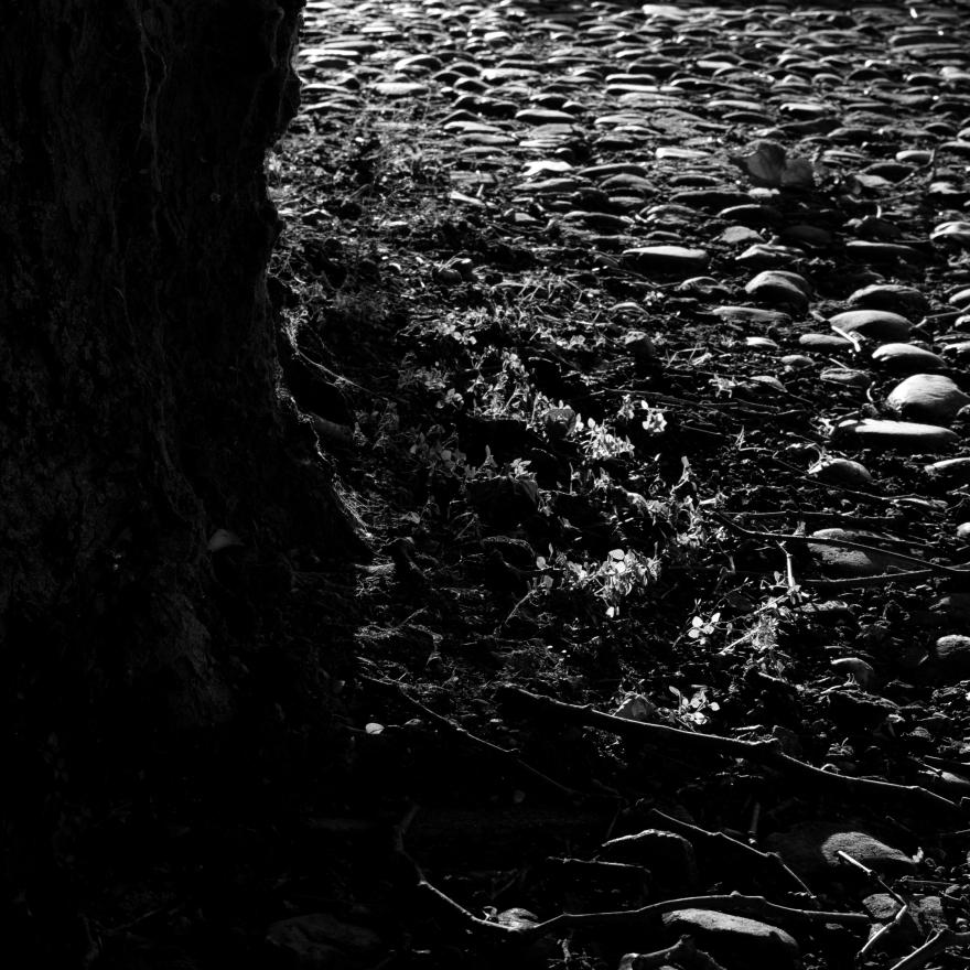 Evening Light on Cobblestones (Flickr).jpg