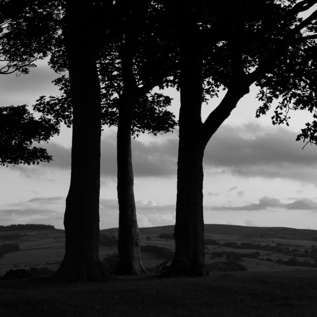 Trees on a Hill, 01