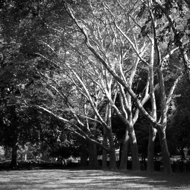 Row of Trees (Flickr).jpg